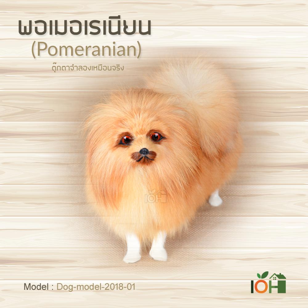 พอเมอเรเนียน Model01 ตุ๊กตาจำลองเหมือนจริง (Pre-Order)