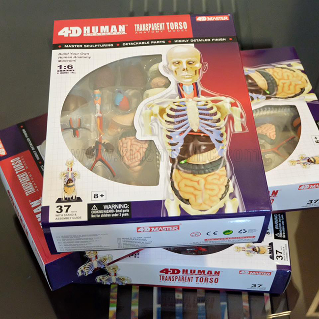 HUMAN ANATOMY PUZZLE (4D MASTER)