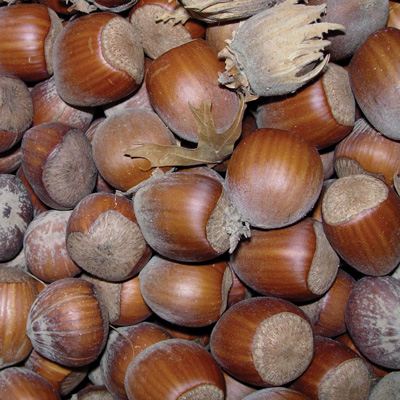 Hazelnuts (เฮเซลนัท)