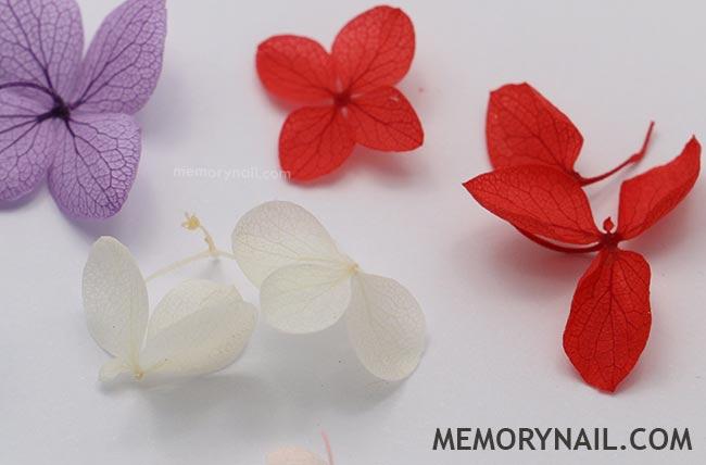 ดอกไม้แห้ง,ดอกไม้แห้ง ติดเล็บ,ดอกไม้ติดเล็บ,ดอกไม้แต่งเล็บ