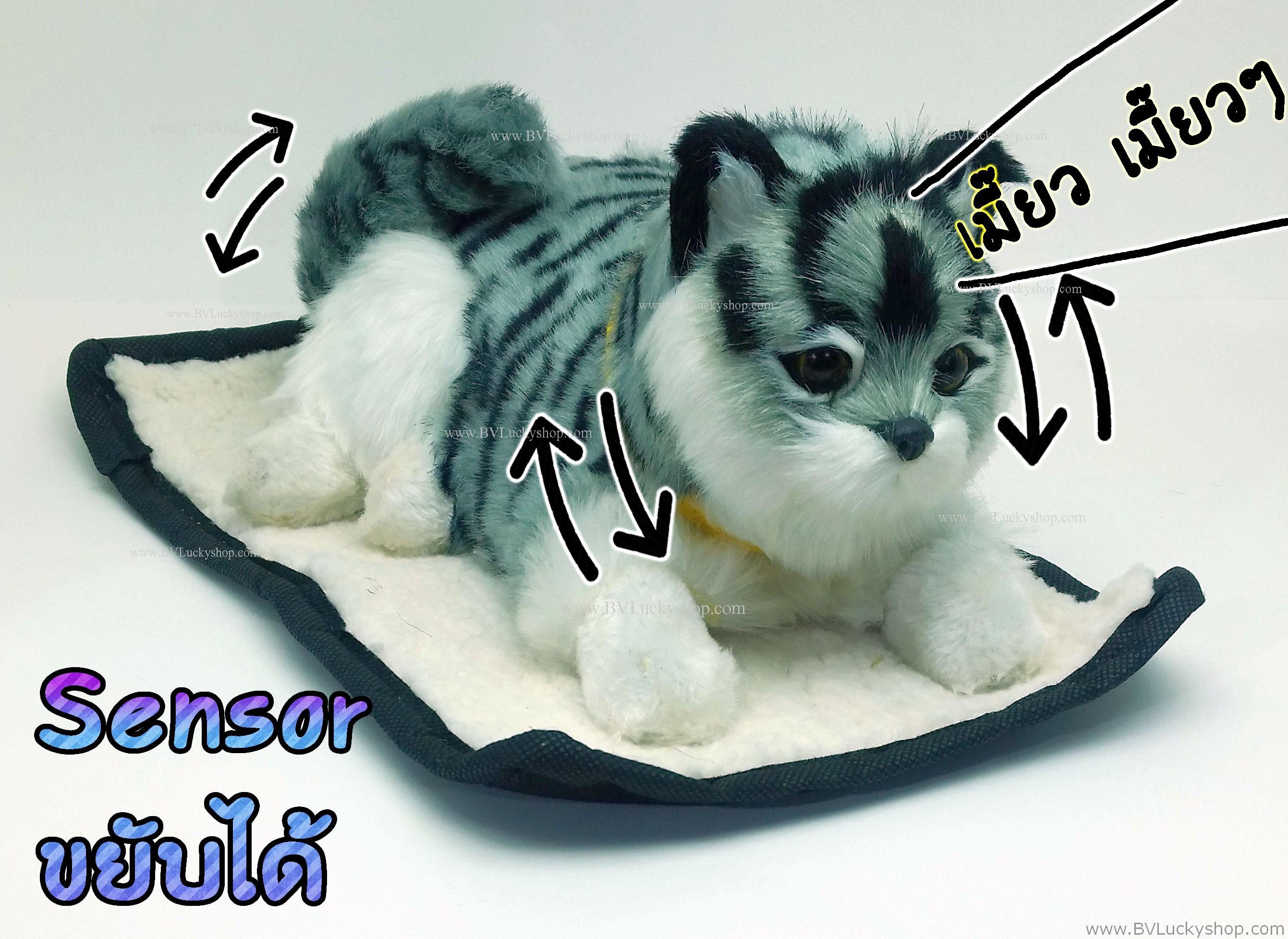 ตุ๊กตาแมว เซ็นเซอร์จับมือผ่าน แล้วส่วนหัวและหางจะเคลื่อนไหว และมีเสียงร้องเมี้ยวด้วย [Cat-SS2]